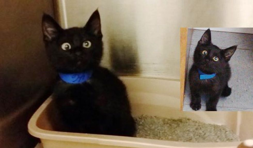 Special Shelter Kitty with Adorable Googly Eyes