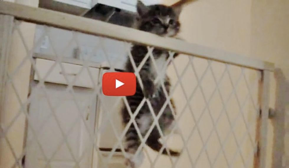 Kitten Figures Out His Escape in Less than 2 Minutes