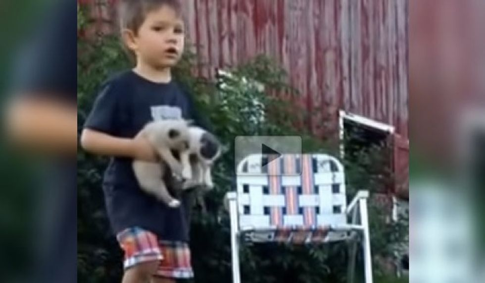 Toddler Kitten-sits Five Fur Babies and Takes His Duty Very Seriously