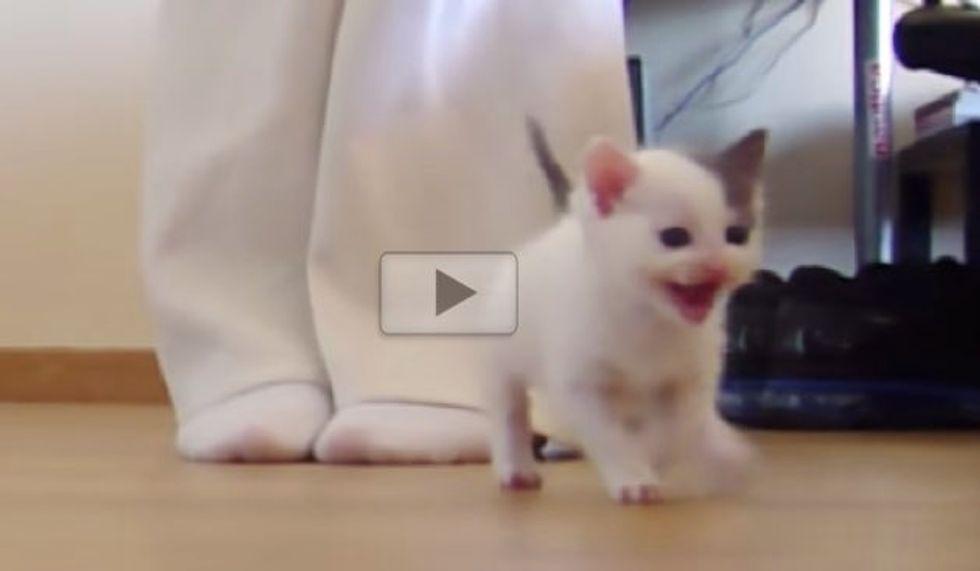 Waddling Kitten Making Her First Steps