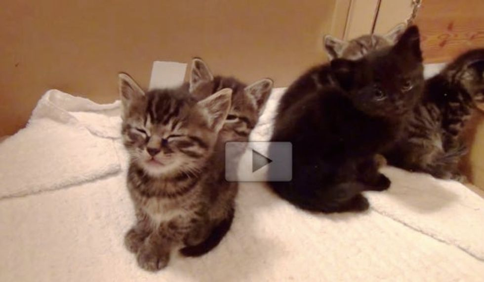 These Five Foster Kittens, Only One Isn't Affected by the Sleepy Bug