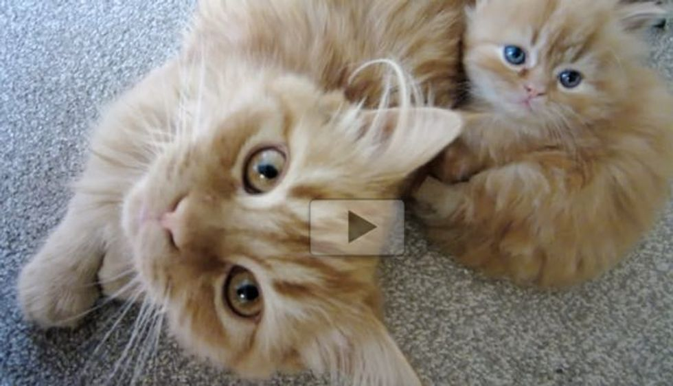Adorable Furry Family Will Make Your Heart Smile