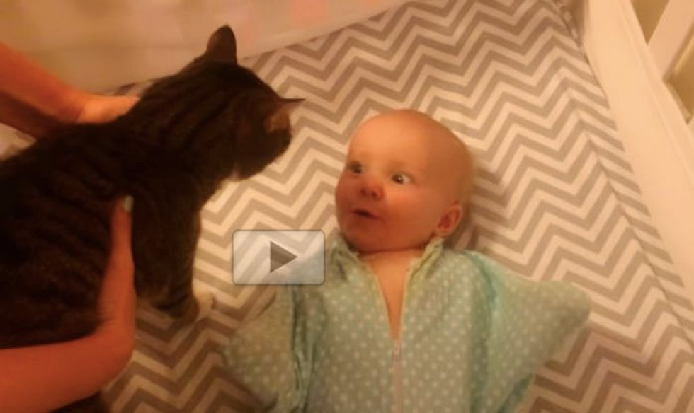 Baby Loves Her Kitty So Much She Can't Handle It