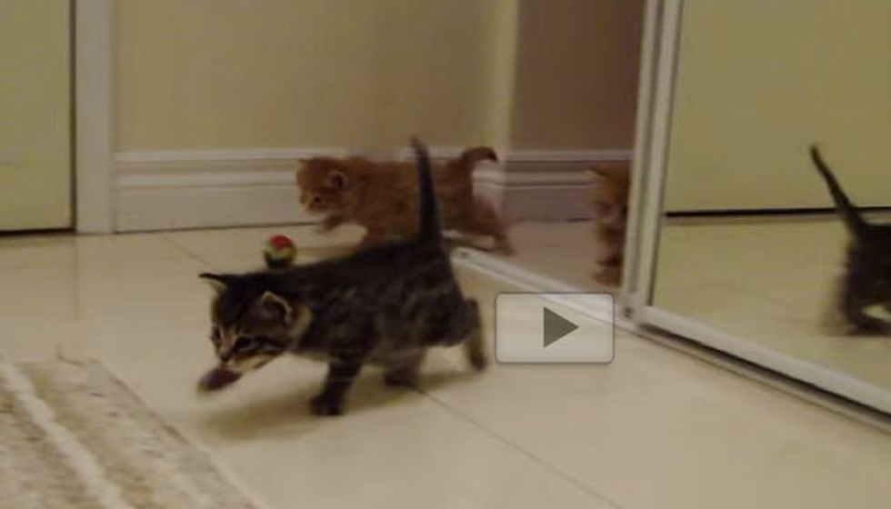 Waddling Kittens Marching In When They Hear Foster Mom Call