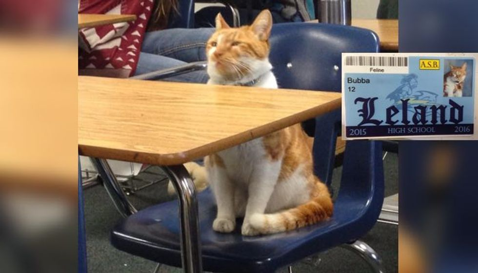 Ginger Cat Bubba Loves School So Much They Issue Student Body Card for Him
