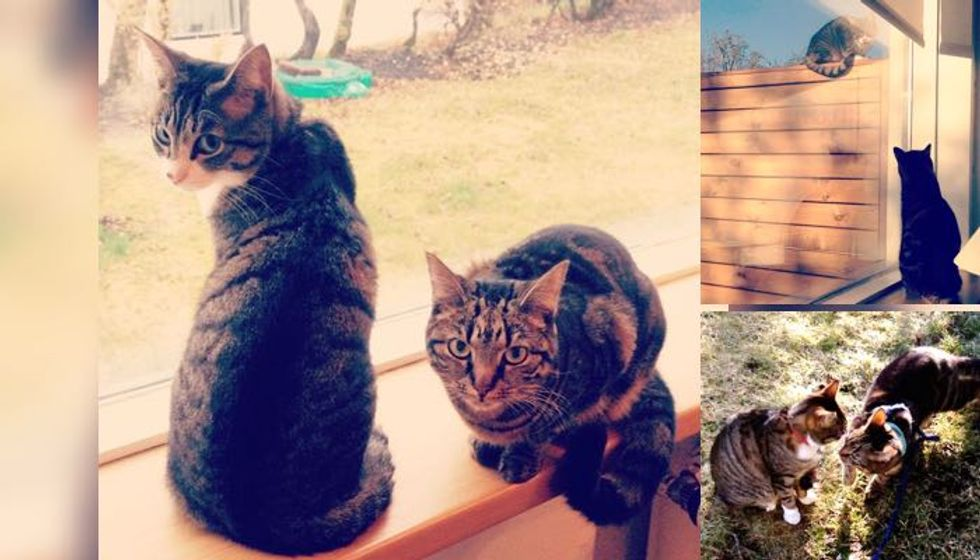 Unbreakable Friendship Between a Tabby and a Neighbor Cat