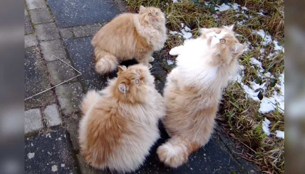 Giant Fluff Balls Jumping Around in All Their Glorious Fur