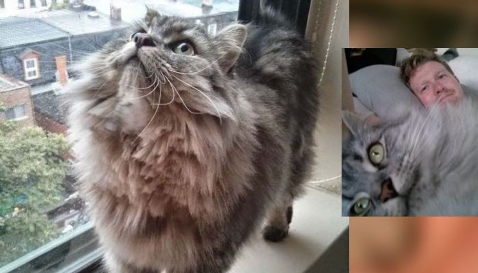 Cat Rescued from Death Row Waited for His Forever Human, the Happiness After Adoption...