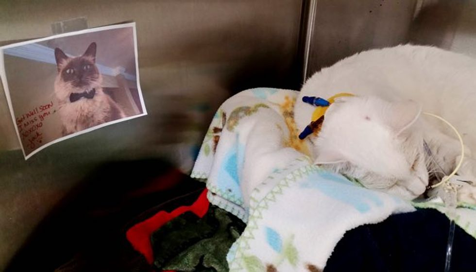 Hospitalized Kitty Gets Picture and Message from Her Best Furiend. Sooo Heartwarming!