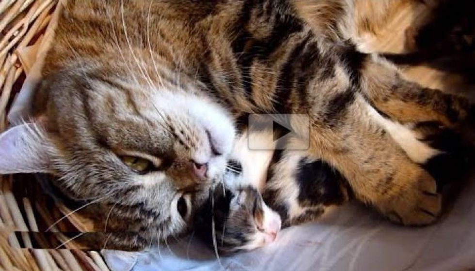 Loving Cat Mama Trying to Hug Her Babies, All 7 of Them