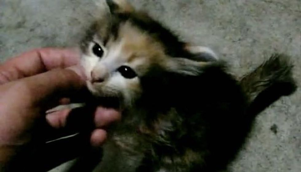 Feral Kitten Feels Loved for the First Time. It's the Sweetest Thing