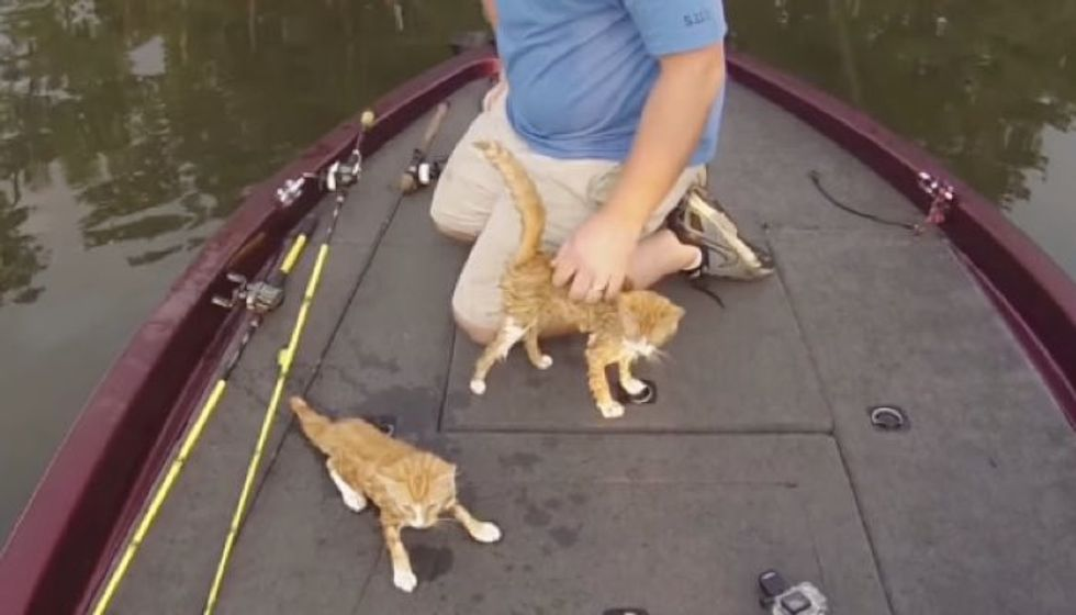 Fishermen Rescue Abandoned Kittens that Swam to Their Boat