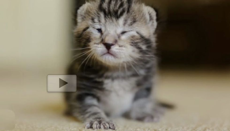 8 Day Old Kitten Rescued from Death Row. Look at Her Now!