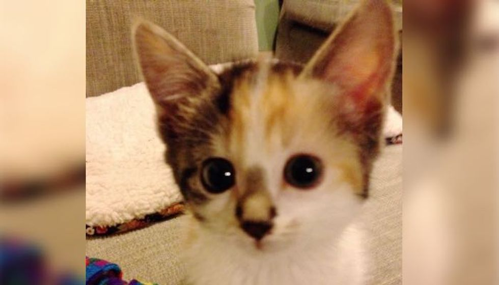 No One Expected this Kitten Born with a Broken Heart to Survive. A Year Later... Look at Her Now