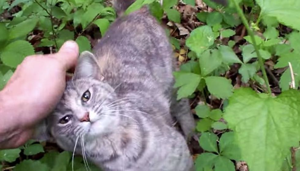 Man Went into Woods but Came Out with a Cat He Rescued