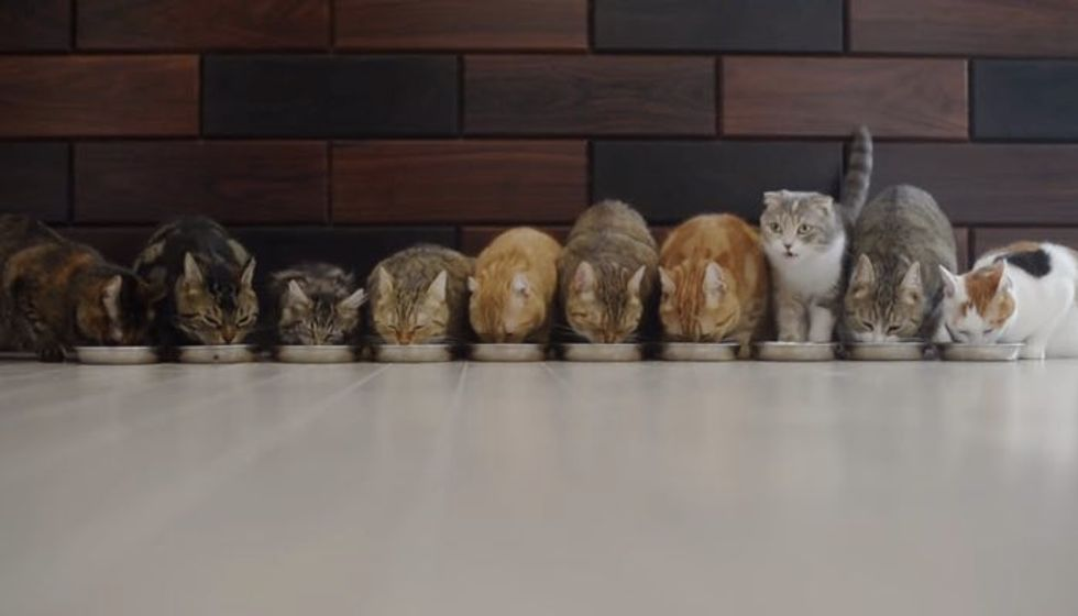 10 Cats Eat in Purrfect Harmony. One of Them Steals the Show