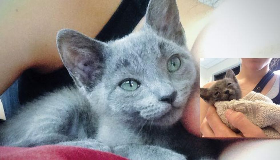 Woman Went for a Jog and Found a Stray Kitten who Desperately Needed Love...