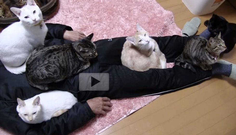 6 Cats Capture Their Human When He Gets Home