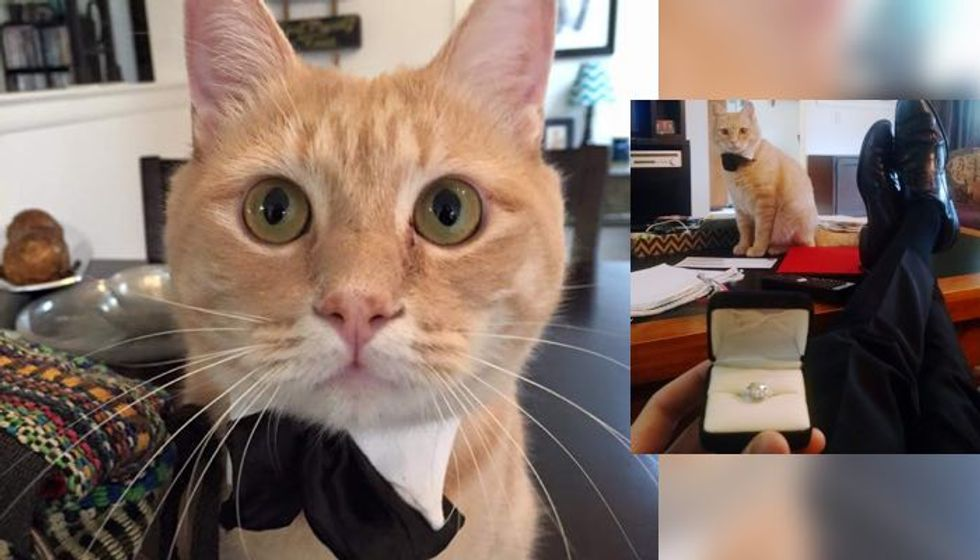 Cat Gives Man Moral and Bowtie Support for His Marriage Proposal