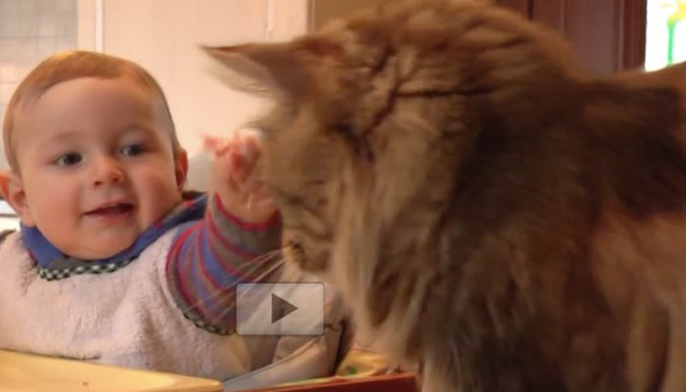 Baby Learns to Give His Maine Coon Cat Buddy Treats
