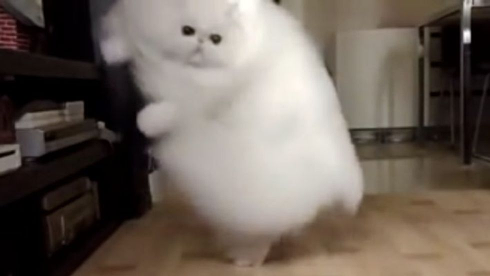 Giant Cloud of Fluff