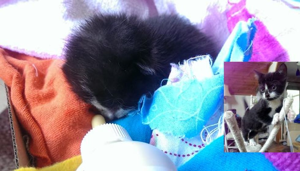 Motherless Baby Kitten Found on Driveway Now Tells Her Human How Happy She is Every Day