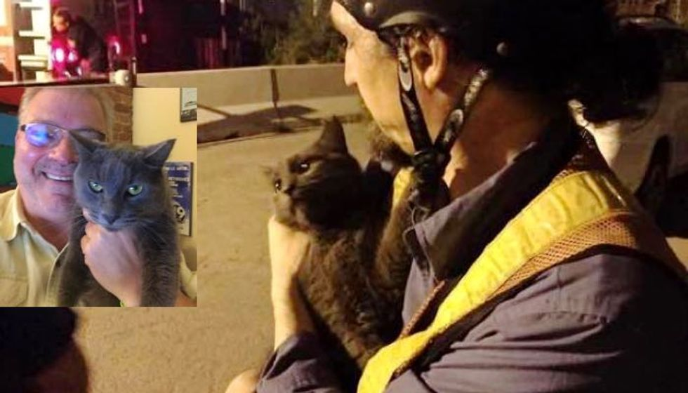 Cat Rescued from Under Bridge Chooses Retired Journalist as Her Human