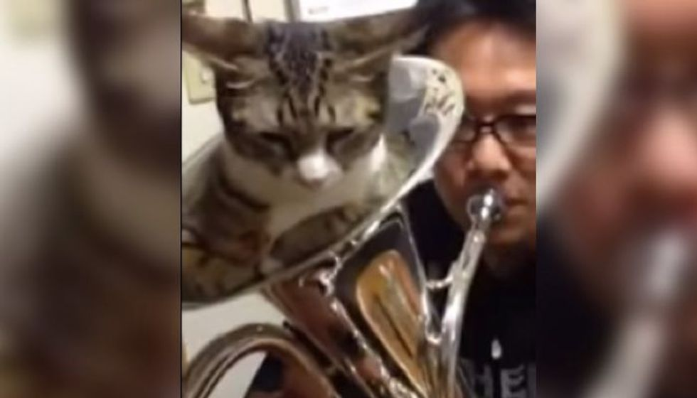 Cat Decides to Be the Mute for Brass Instrument
