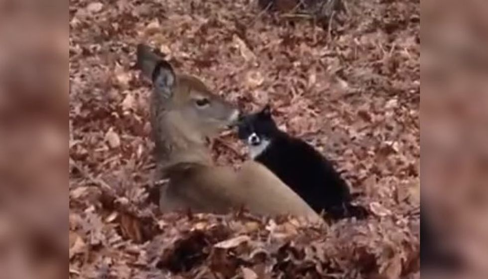 Kitty Has a Deer Admirer Who Comes to Visit