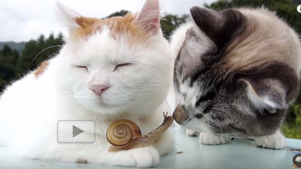 Cat Befriending Tiny Snail with Gentle Nuzzles