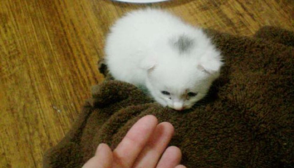 Frightened Kitten Feels Love After Being Saved from Rain, Then and Now