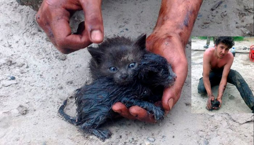Man Rescues Two Kittens from Drowning in Oil Spill