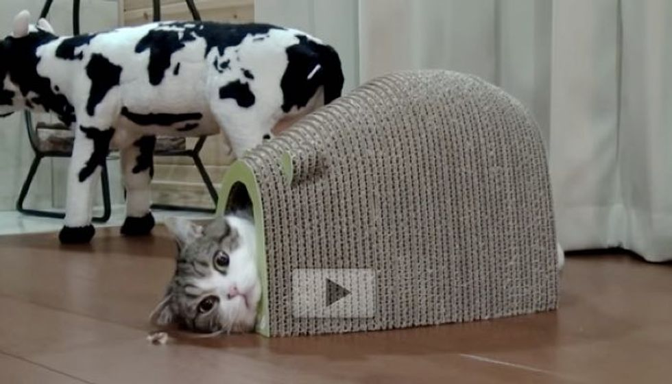 Maru is Sucked into His Mouse-shaped House