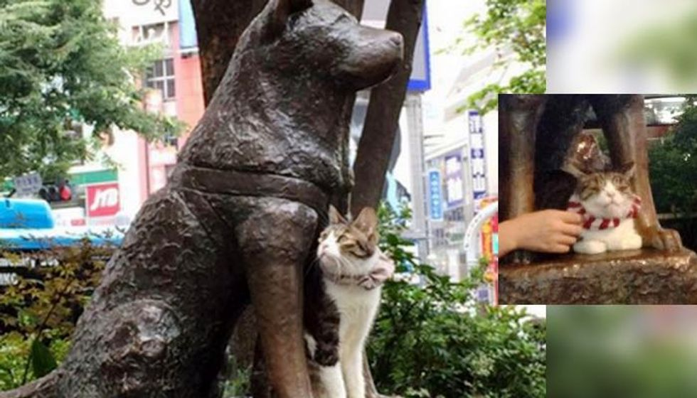 Cat Spotted Hanging out with Hachiko the Faithful Dog, Enjoying Each Other's Company