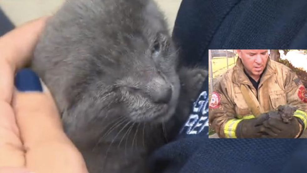 Kitten Floating in Sea of Filth is Saved by Heroic Firefighters