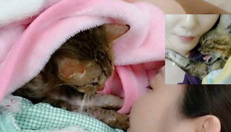 Couple Refused to Give Up on Injured Cat While Everyone Else Decided to Ignore