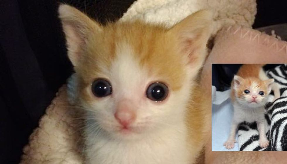 Kitten Barely Grew When He Came to Shelter. Now Finally 1 Pound!