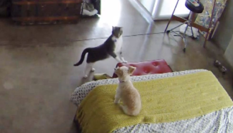 Cat Teaches Barking Pup to Settle Down Better than Most Humans