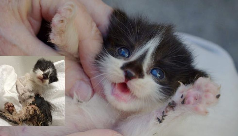 Kitten Found Covered in Glue, Now Covered in Love