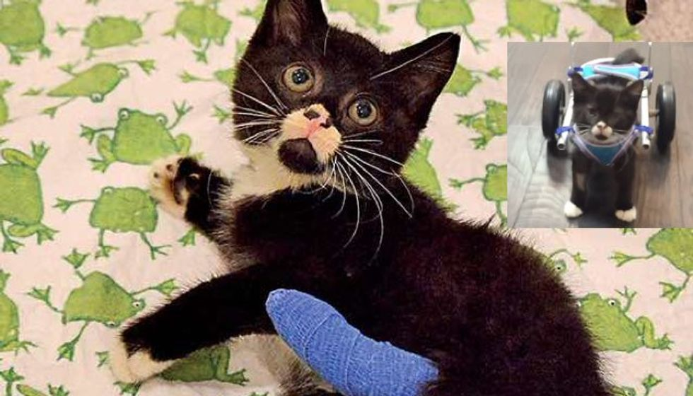 Bipawd Kitten Spent His First 9 Weeks Living in Forest, Never Gave Up!