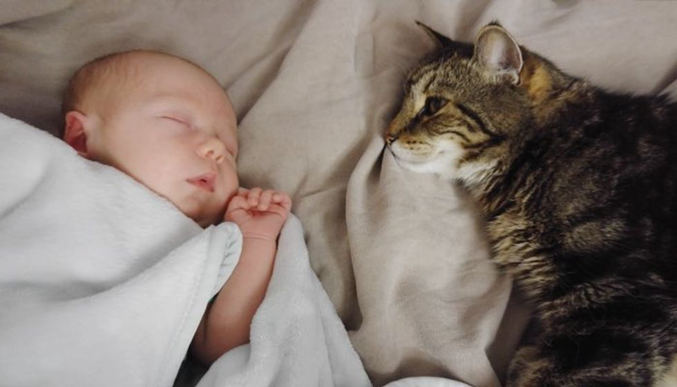 Cat Waited 9 Months to Meet His New Buddy