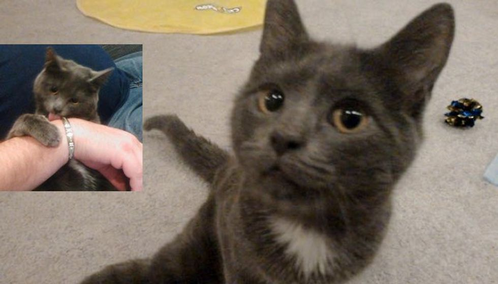 Special Needs Cat Saved from Death Row Waited for His Loving Home. Now a Year Later...