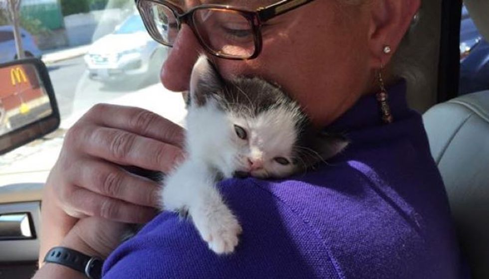 Woman Rescues Kitten Born Special While Others Decided to Give Up (with Updates)