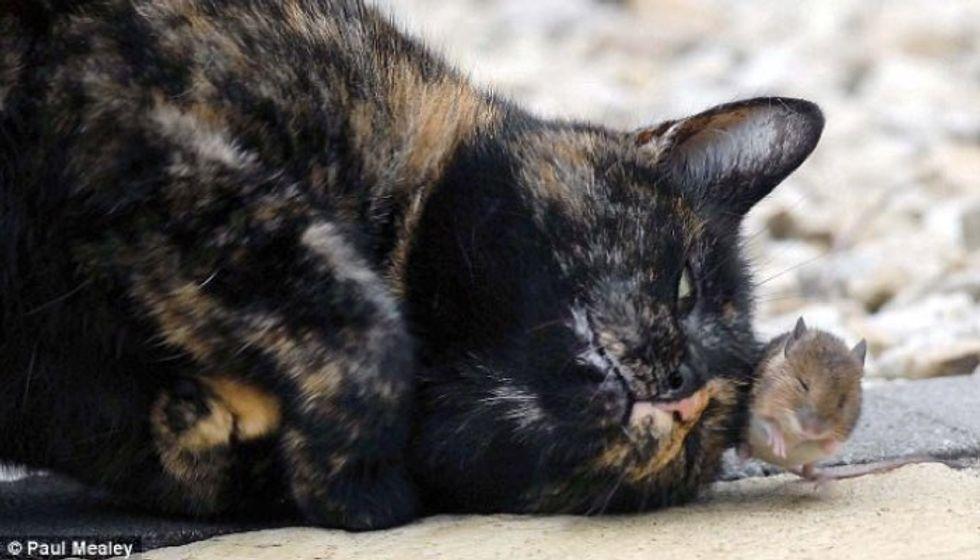 Tortie Cat Makes an Unlikely Little Friend