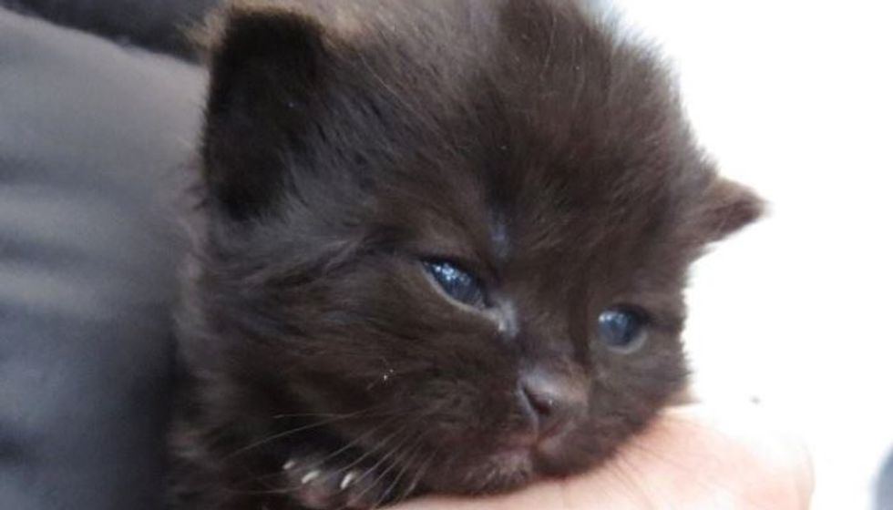 Young Teens Jump into River to Save Kitten and Walk Miles to Get Help