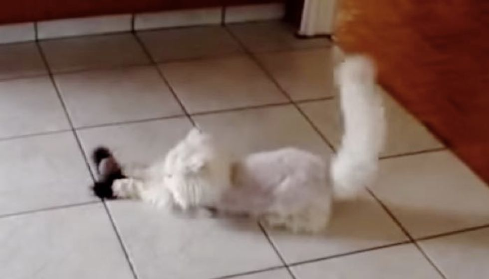 14 Year Old Rescue Cat Plays Like a Kitten in Her New Home