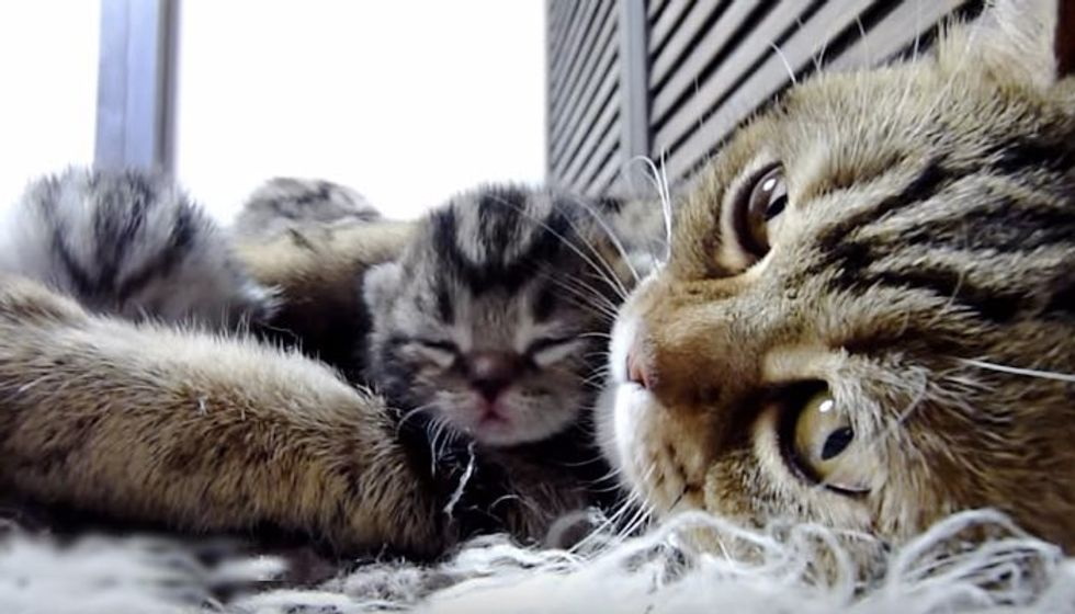 Mama Purring Aloud to Her Little Fur Babies