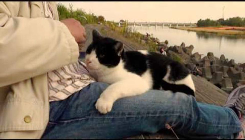 Fishermen Fish for Their Beloved Island Cats