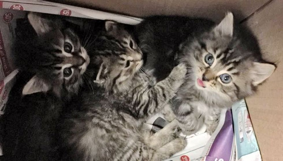 Tabby Kittens Found in Wine Box from Scared to Loved