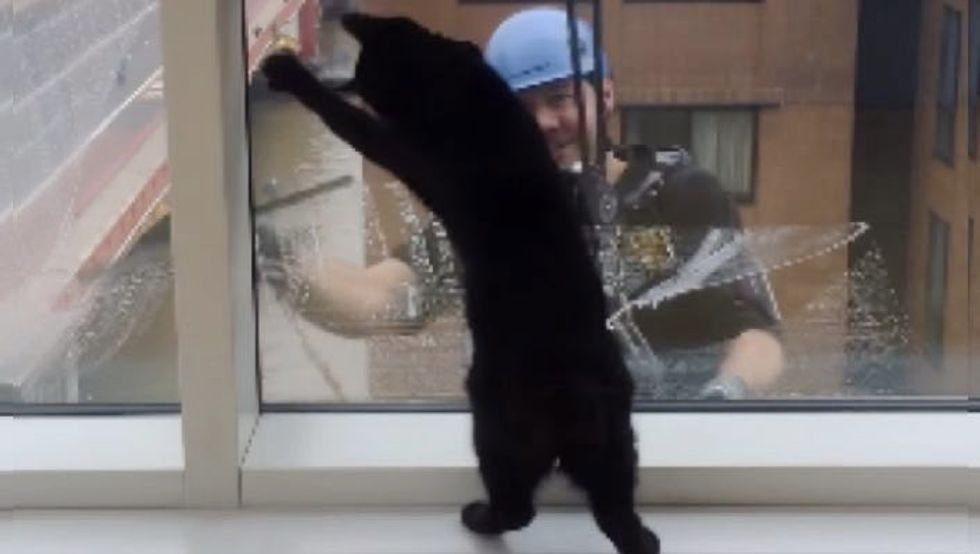Cat and Window Cleaner Become Best Friends After Months of Meeting at the Same Window